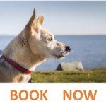 CALM APPROACH Puppy/Dog Programs